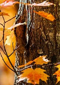 دخول فصل الخريف ومؤشرات على موسم مطري فعال
