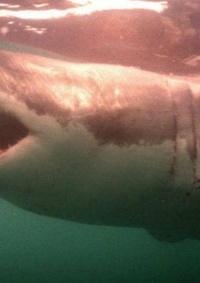 معاناة القرش.. لماذا تتألم الملايين من
