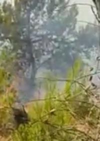 بسبب زجاجات حارقة .. حريق كبير قرب مستوطنة جنوبي بيت لحم