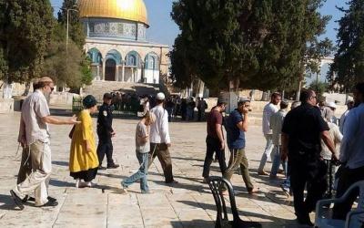 144 متطرفًا يهوديًا يقتحمون المسجد الأقصى