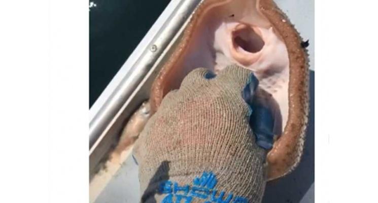فيديو يجذب ملايين المشاهدات ... رجل يداعب سمكة وتضحك