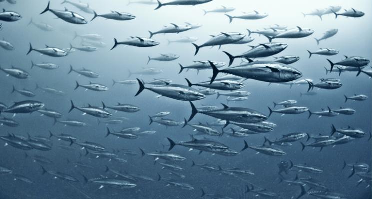 """إطلاق آلاف الأسماك من طائرة و""""كأنها تنفجر حقا"""""""