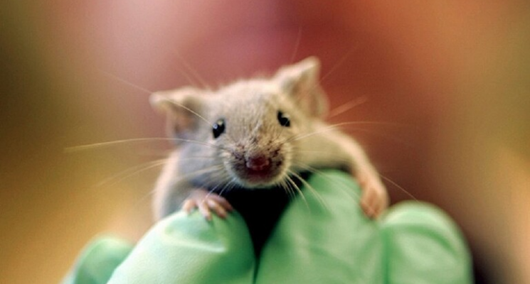 إسبانيا.. فأر يقتحم جلسة برلمان ويثير فوضى بين النواب